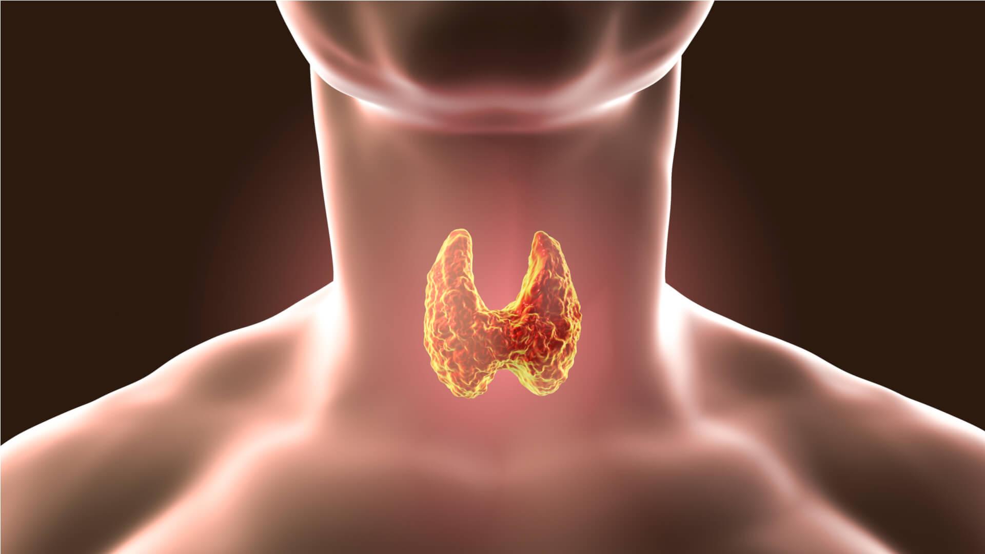 glanda tiroida